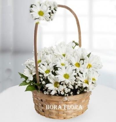 Bora Flora Papatya sepeti