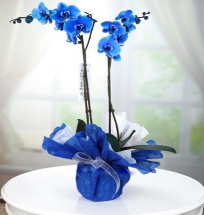 Bora Flora Mavi Orkide